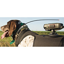 GARMIN Short Dog Harnesses for VIRB Camera